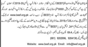 BEEF Scholarships 2020